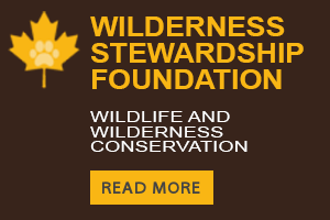 Wilderness Stewardship Foundation