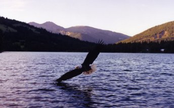Eagle over Spruce Lake -Trial History