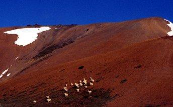 Eldorado Mountain with Mountain Goats -Trial History